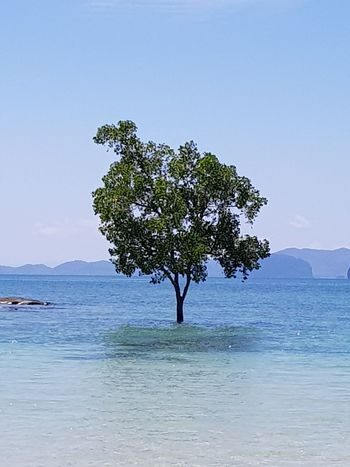 Tree Beach Tranquility Tranquil Scene Nature Sky Landscape Beauty In Nature Outdoors Blue Water Mountain Social Issues Sea No People Scenics Clear Sky Day