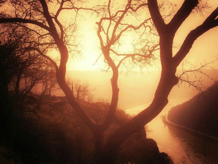 Loreley Rhine Rheinblick TreePorn