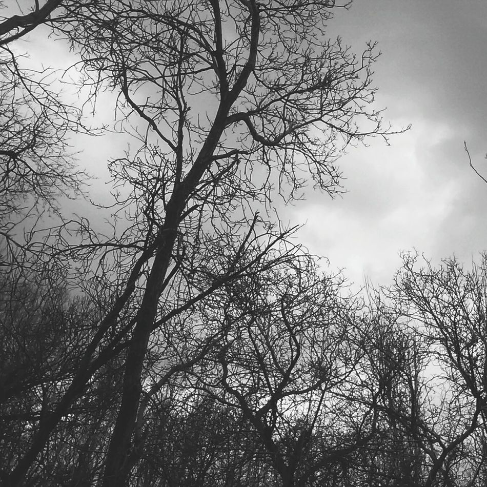 Part 2 Of .. Cloud - Sky Nature Tree Iran Freez Hand Free Soul Black & White Black&white Blackandwhite Photography Black And White Photography Black And White Blackandwhite Lifestory Silent Moment Should Be Here MJ028