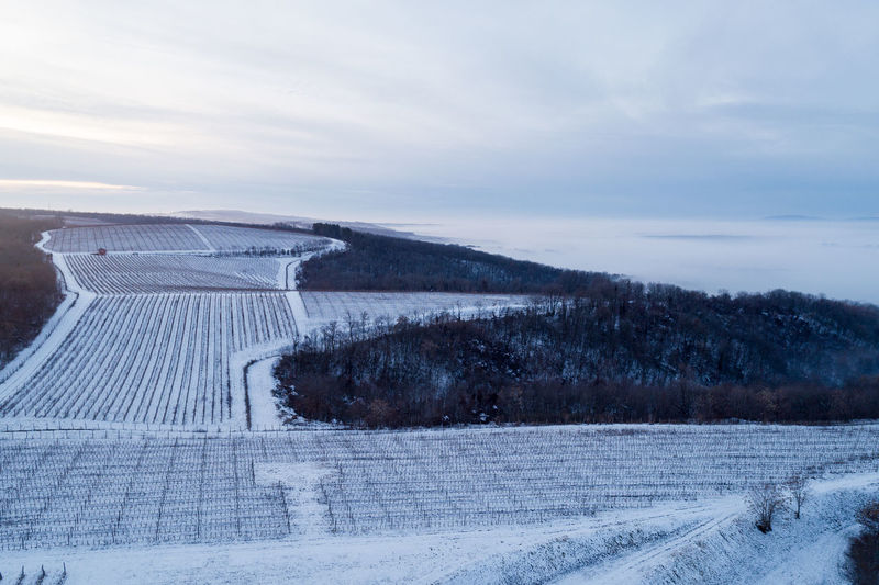 Villány, Hungary Villany Wine Vinery Vineyard Grape Plantation Villany Wine Region Wineregion Sky Cloud - Sky Scenics - Nature Nature Winter Snow Cold Temperature Tranquil Scene Environment Landscape Tranquility No People Beauty In Nature Day Field Land Outdoors Plant Architecture