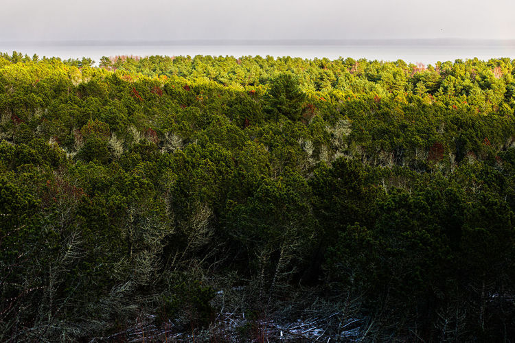 Scenic view of trees by sea against sky