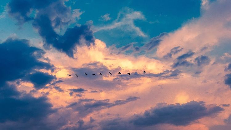 Flying Sky Bird Cloud - Sky Large Group Of Animals Flock Of Birds Animals In The Wild Animal Themes Migrating Mid-air Low Angle View Silhouette Outdoors Animal Wildlife Beauty In Nature Nature Togetherness Scenics No People Day