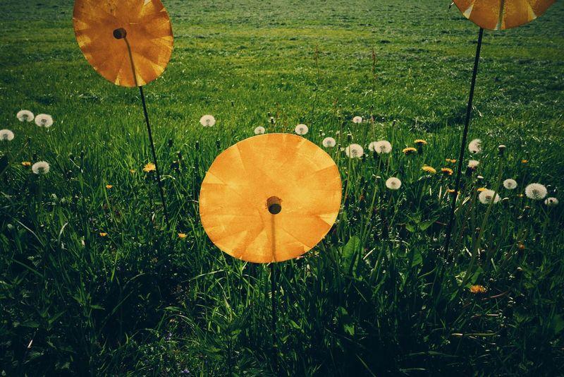 Flowers in disguise. C'mon summer!! Beautiful EyeEm Nature Lover Flowers Summer Summertime Dandelions Grass Fake Flowers Yellow Yellow Flower