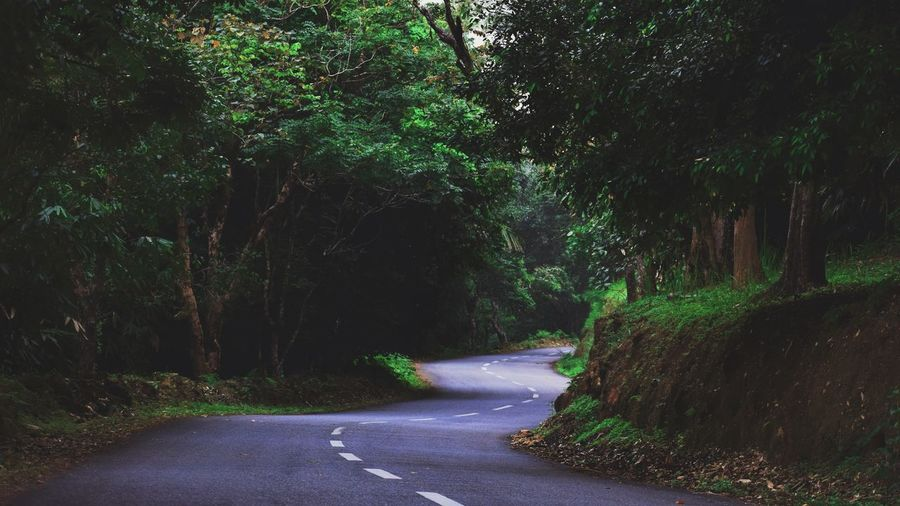 Golden valley Road to Ponmudi Hill Top, Kerala Road The Way Forward Tree Outdoors No People Day Nature Forest Beauty In Nature Ponmudi EyeEm Diversity EyeEmNewHere Nature Backgrounds Full Frame Freshness Green Color Beauty In Nature Outdoor EyeEmNewHere