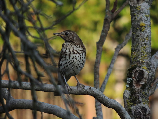 Animal Animal Themes Animal Wildlife Animals In The Wild Beauty In Nature Bird Branch Close-up Day Focus On Foreground Looking Nature No People One Animal Outdoors Perching Plant Tree Tree Trunk Vertebrate Woodpecker
