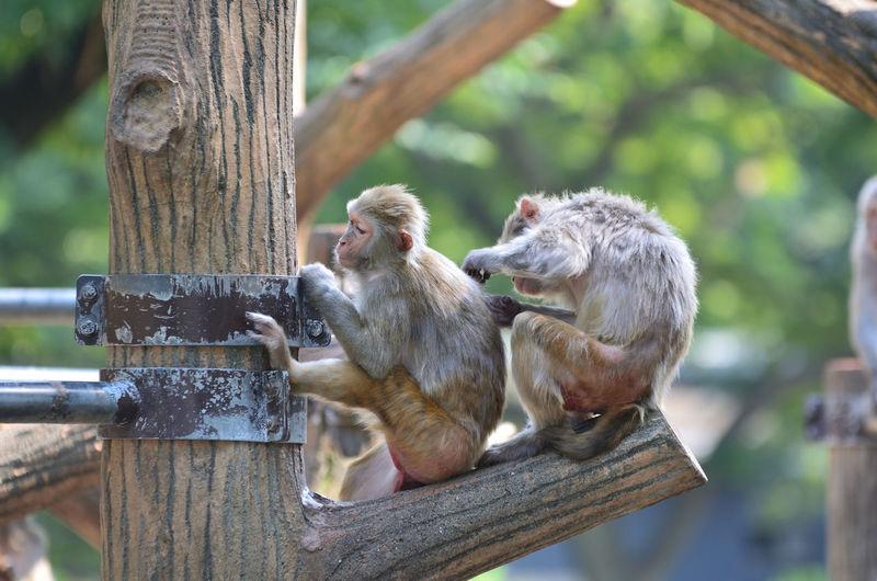 Two monkeys sitting side by side on branch