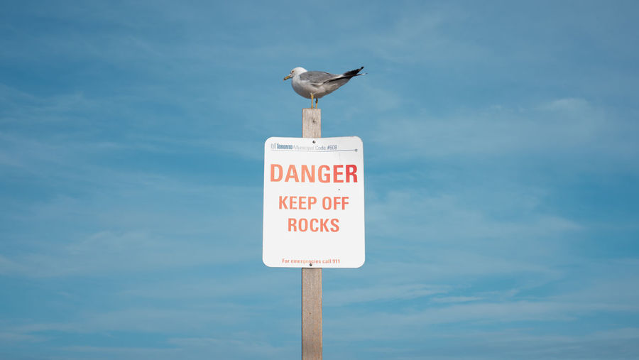 Seagull perching on information sign against sea during sunny day
