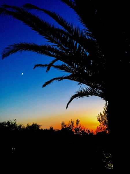 Silhouette Tree Nature Blue Beauty In Nature Tranquility Sunset Growth Tranquil Scene Palm Tree Sky Scenics Moon No People Outdoors Night