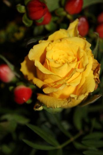 Flowers Rose♥ La Vie En Rose Nature