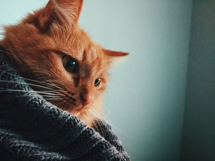 Close-up of a relaxed cat looking away