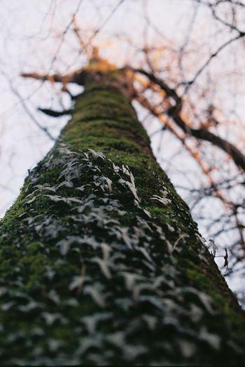 Film Bare Tree