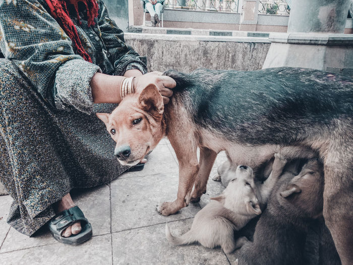 Low Section Of Woman Petting Dog On Street