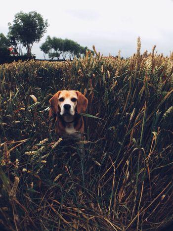 Dog Nature Vscocam Through The Lens