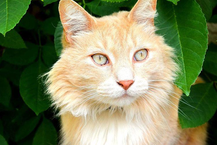 Bright Eyes Cat