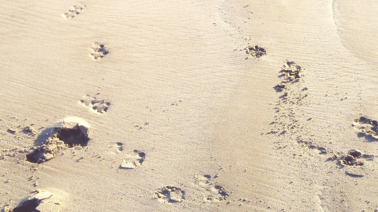 sand, nature, high angle view, day, footprint, outdoors, no people, paw print, beach, landscape, animal themes, beauty in nature, mammal
