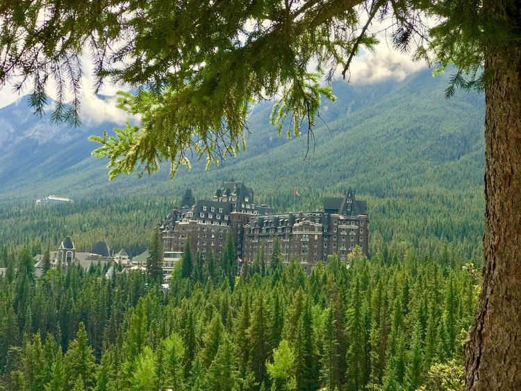 Tree Mountain Growth Nature Green Color Mountain Range Beauty In Nature Forest Scenics Outdoors No People Day Landscape Sky IPhoneography IPhone 7 Plus Banff Springs Hotel