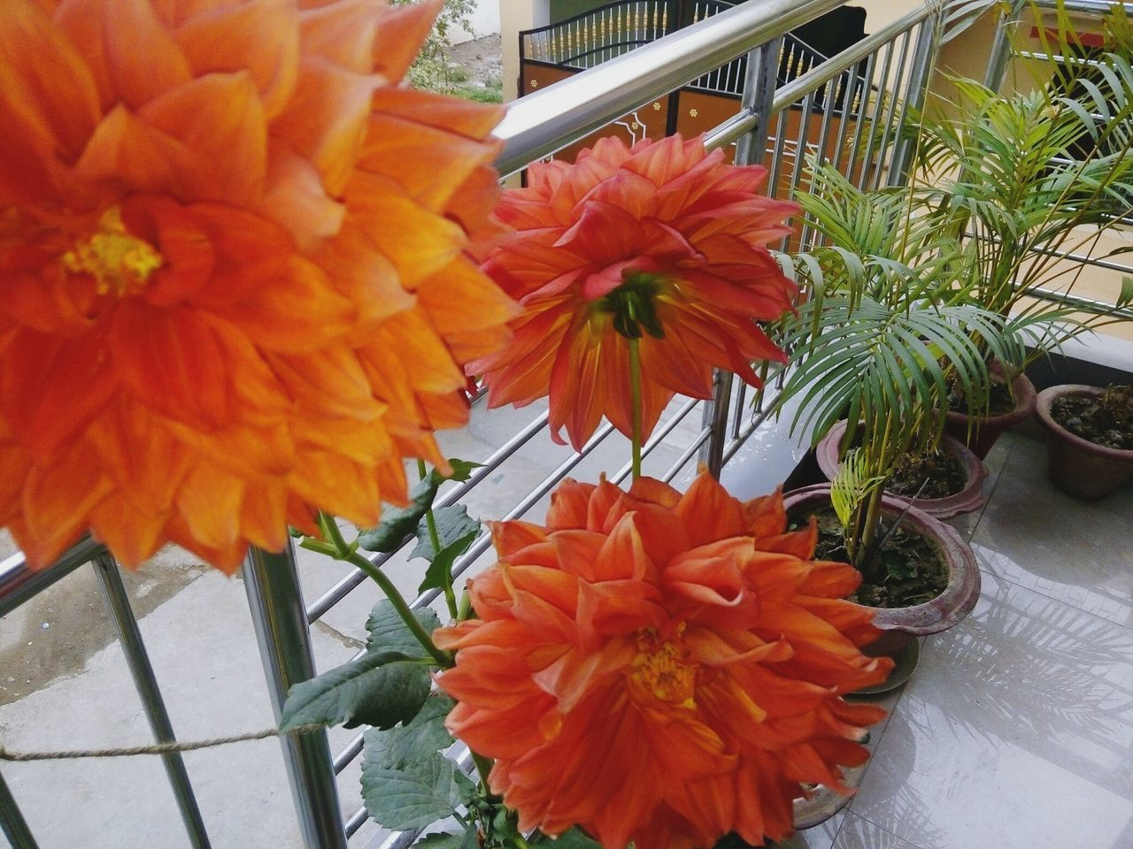 flower, orange color, freshness, fragility, beauty in nature, petal, flower head, nature, growth, day, close-up, plant, no people, outdoors, blooming, greenhouse