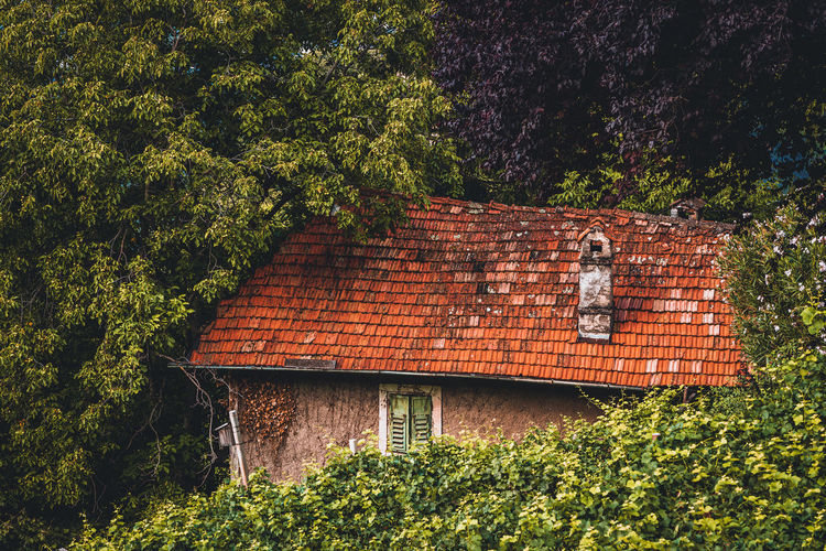 Brick wall of old house and trees