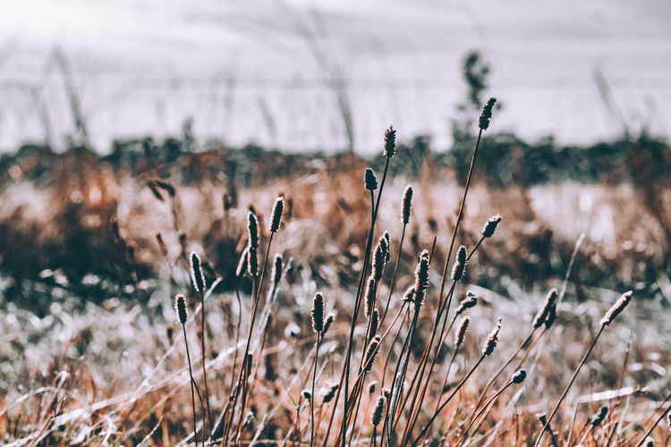 Adventure Awaits Adventure Awaits 🌲 All Of The Lights Architecture Art Of Visuals Australia Beauty In Nature Chasing Light Close-up Create Commune Day Field Focus On Foreground Freshness Grass Growth Minolta Rokkor Pf 58mm F1.4 Nature Never Stop Exploring No People Outdoors Plant Sky Tranquility #FREIHEITBERLIN