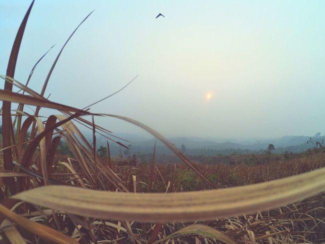 Enjoying Life Life Sunset Sunset_collection Wild Nature Sunsets Sunset And Clouds  Lifeisbeautiful World Landscape Xiaomiyi_indonesia Xiaomiyi_id Xiaomiyi Q Hello World