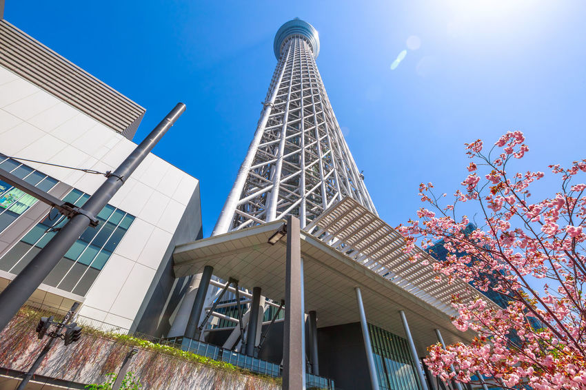 Tokyo Skytree with cherry blossoms in full bloom in Sumida District, Tokyo, Japan. Tokyo Skytree is the tallest tower in the world, broadcasting and observation tower. Asakusa,tokyo,japan Cherry Cherry Blossom Cityscape Hanami Sakura  Japan Japanese  Observatory SkyTree Tower Skyline Skytree Tokyo Tokyo Tokyo,Japan Top Tree Aerial View Architecture Asakusa Blue Building Building Exterior Built Structure City Clear Sky Day Flower Hanami Low Angle View Modern Nature No People Office Building Exterior Outdoors People Plant Sky Skyscraper Skytree Spire  Sumida Sunlight Tall - High Tower Travel Destinations Tree