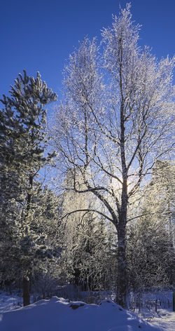 Winter Snow Tree Cold Temperature Nature Blue Beauty In Nature No People Low Angle View Sky Outdoors Branch Freshness Day