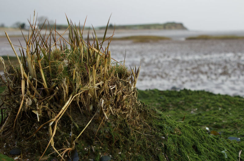 Beach Sea Grass Close-up Landscape Sky Growing Plant Life Coast Growth Coastline Shore