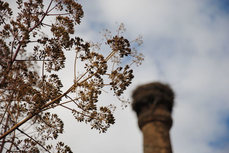 Low angle view of branches and tower against cloudy sky