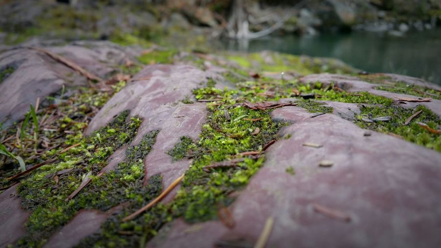 The KIOMI Collection Green Leaves Blurside Nice Rocks Moss And Lichen