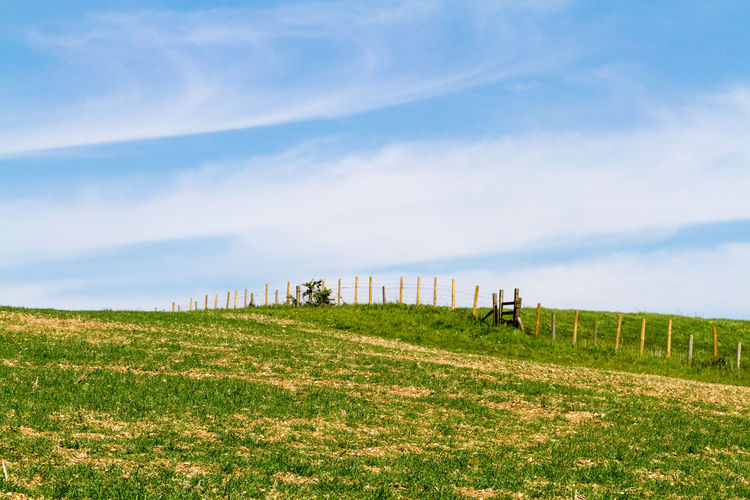Scenic view of grassy field against sky