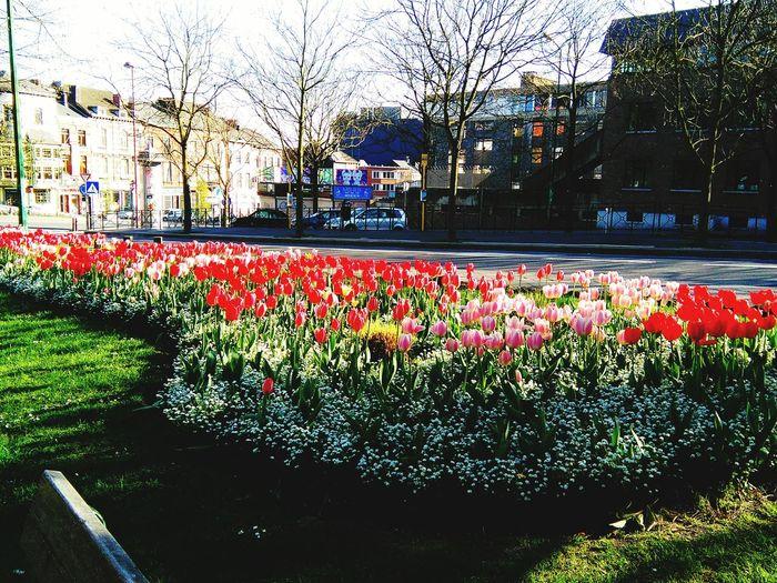 Parc Flowers In Park Fleurs Цветы 🌸🌷🌼🌹