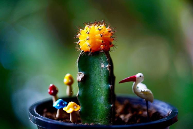 Grafted Cactus Cactus Animal Animal Themes Flower No People Close-up Flowering Plant Animal Wildlife Nature Green Color Focus On Foreground Plant Bird Freshness Vertebrate Beauty In Nature Water Food Day Outdoors