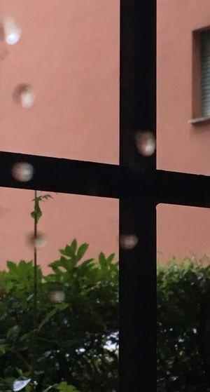 The Week On Eyem Through The Window Window View Gate House Gate To The World Rain Drops Leaves Hedge In My Terrace Neighborhood Map BYOPaper!