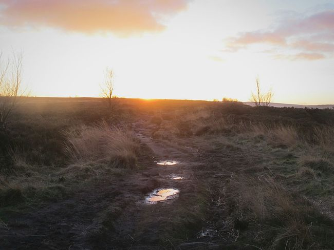 Nature Sunset Landscape Sunlight Grass Scenics Beauty No People Tree Sky Gold Colored Outdoors Beauty In Nature Close-up Day Winter Tranquil Scene Outdoors EyeEmbestshots. Eyeemphotography Fine Art Photograhy Heather & Gorse Moorland Dusk Sunset_captures Reflection