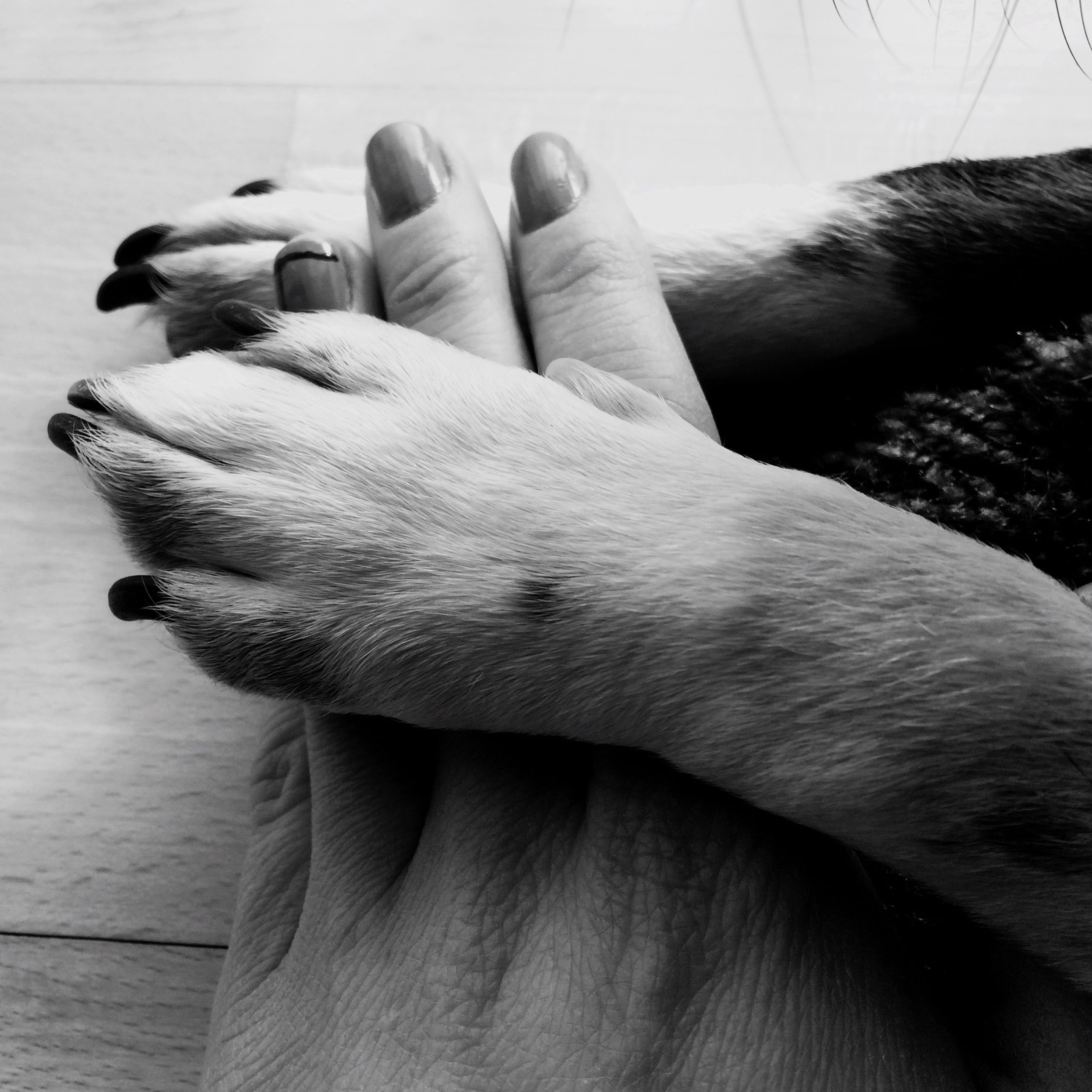 person, indoors, men, lifestyles, part of, animal themes, unrecognizable person, leisure activity, cropped, holding, close-up, personal perspective, human finger, pets, relaxation, togetherness