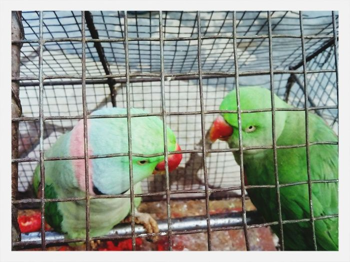 Parrot in jail. ;-)