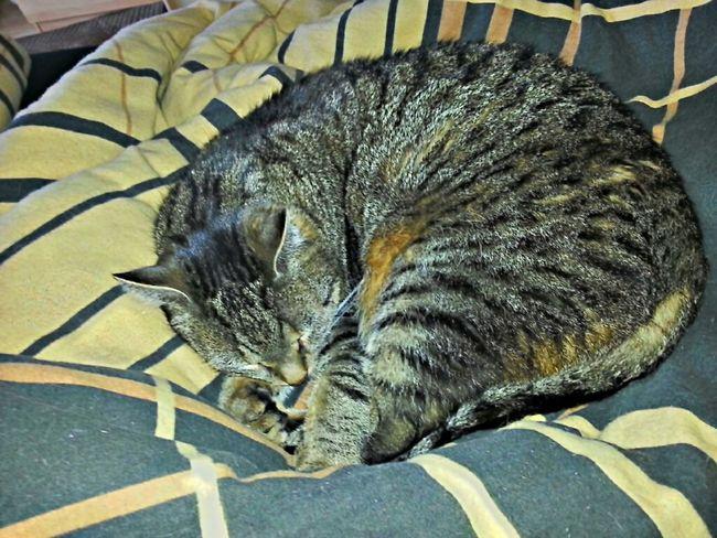 #no #stress Relaxing Cat My Cat