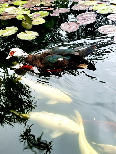 Against The Flow Just Taking Pictures Colour Of Life Water Reflection Bird Photography Nature Fish Pond Life Pond Counterflow ICU Icu_nature Albert Park Perspectives On Nature
