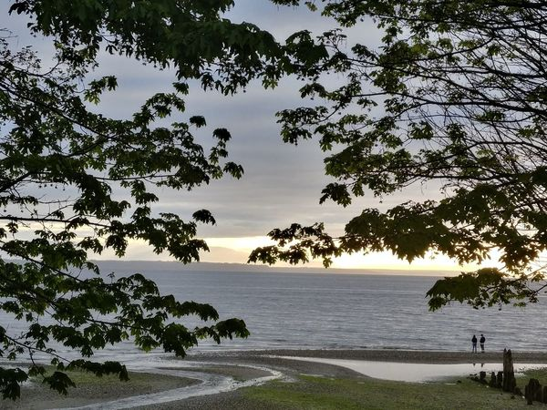 Beach Beauty In Nature Branch Day Growth Horizon Over Water Nature No People Outdoors Scenics Sea Sky Tranquil Scene Tranquility Tree Water