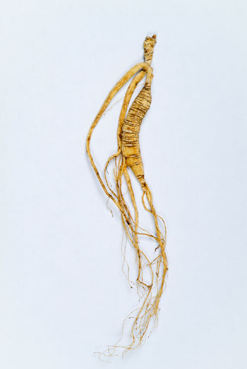 Close-up of rope on white background