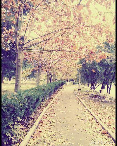 ☀🍁🍁🍁 Winter
