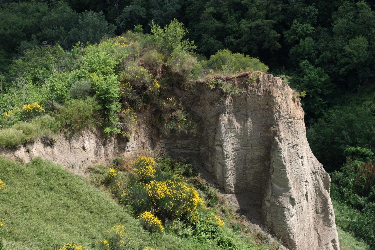 Plants Growing Amidst Rock