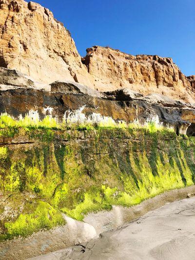 Green glow Beach Coastline Coast Moss Rocks EyeEm Selects Sky Nature Day No People Beauty In Nature Sunlight