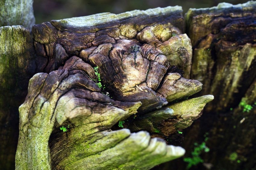 Close-up Focus On Foreground Outdoors Textured  Tree Trunk Wood - Material
