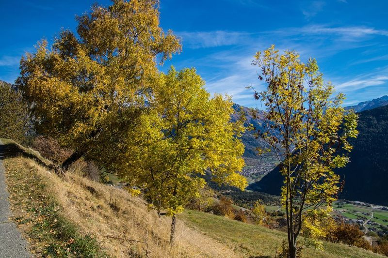 levron,valais,swiss Plant Tree Autumn Sky Nature Beauty In Nature Landscape Scenics - Nature Land Environment Day Tranquility No People Plant Part Leaf Rural Scene Tranquil Scene Yellow Cloud - Sky Outdoors Change