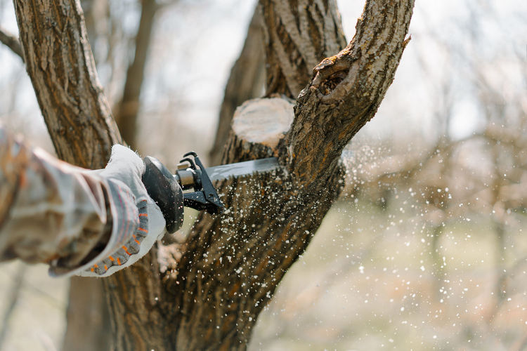 Close-up of hand in protective workwear holding saw and sawing tree trunk