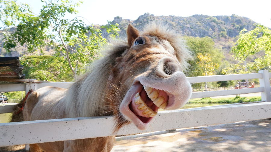 One Animal Animal Themes Mammal Mouth Open Animal Animal Head  Day No People Domestic Animals Animals In The Wild Outdoors Animal Wildlife Close-up Tree Nature Safari Animals Protruding Horse Funny Faces FUNNY ANIMALS Teeth Toothy Smile