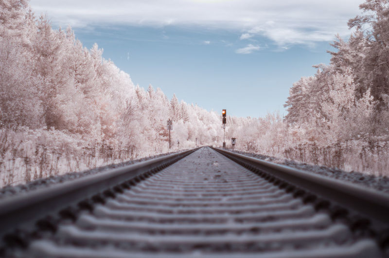 Surface level of railroad track amidst trees against sky
