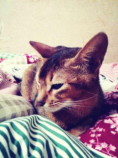 my cat<З