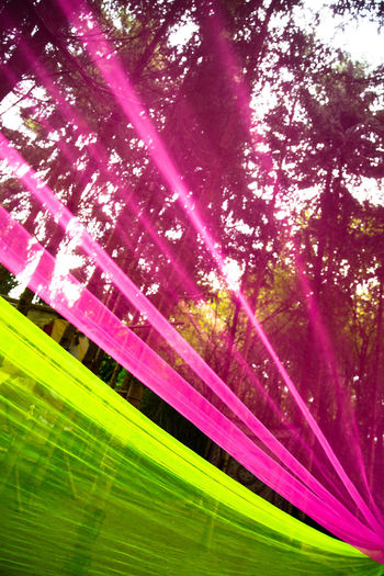 Pink Color Tree Plant No People Nature Beauty In Nature Green Color Multi Colored Outdoors Sunbeam Sunlight Growth Vibrant Color Grass Flowering Plant Backgrounds Flower Purple Leaf Plant Part Bright Springtime Textile Transparent Art